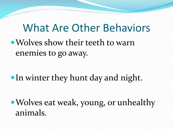 What Are Other Behaviors