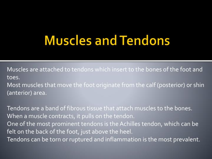 Muscles and Tendons