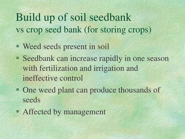 Build up of soil seedbank