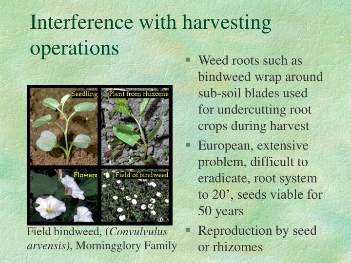 Interference with harvesting operations