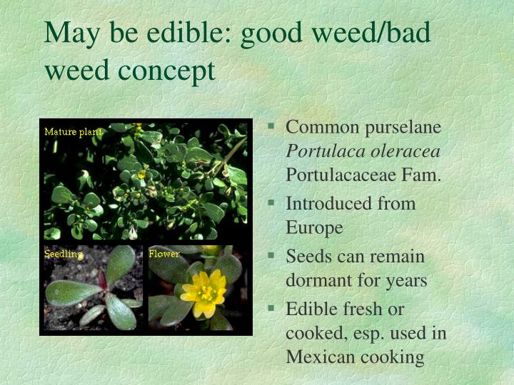 May be edible: good weed/bad weed concept