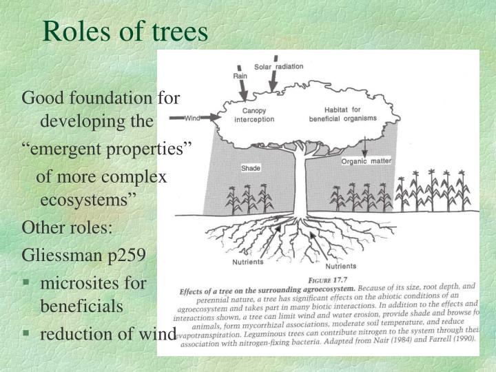 Roles of trees