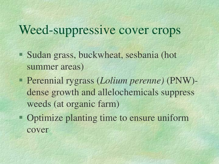 Weed-suppressive cover crops