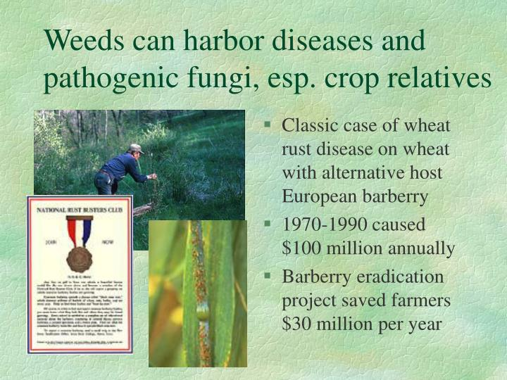 Weeds can harbor diseases and pathogenic fungi, esp. crop relatives