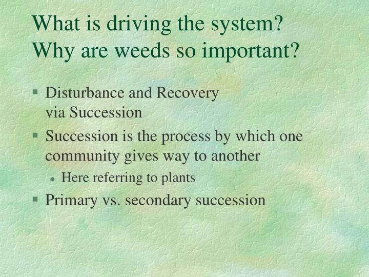 What is driving the system?  Why are weeds so important?