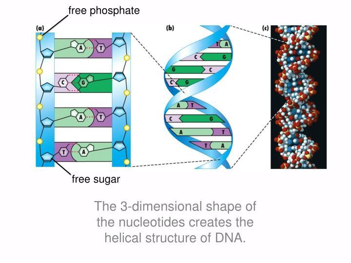 free phosphate