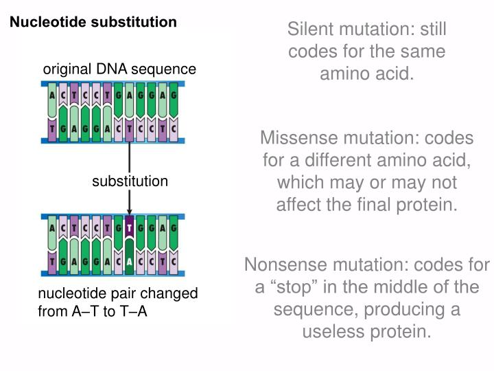 Nucleotide substitution