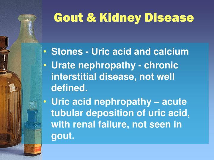 Gout & Kidney Disease