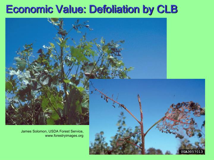 Economic Value: Defoliation by CLB