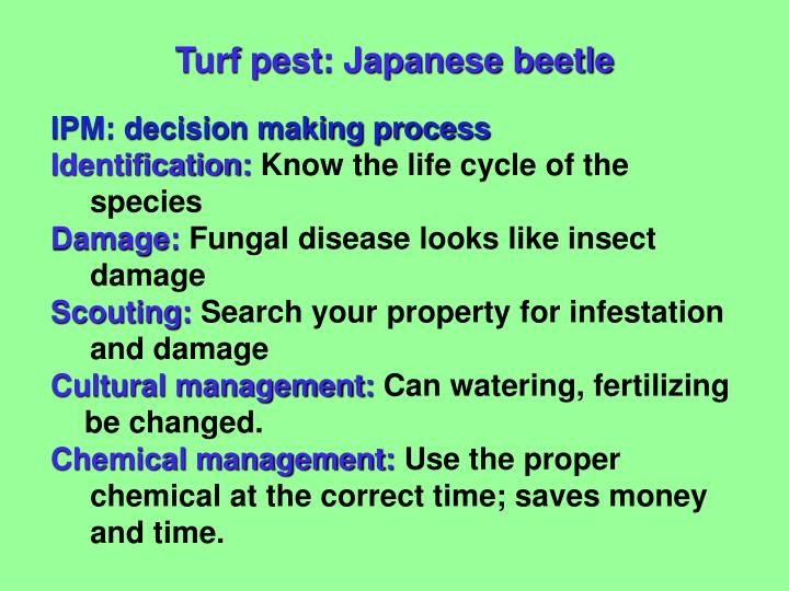 Turf pest: Japanese beetle
