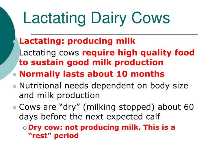 Lactating Dairy Cows