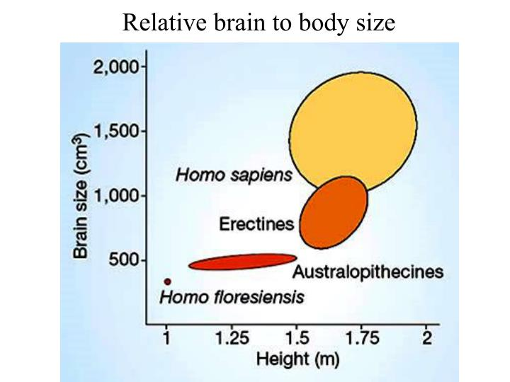 Relative brain to body size