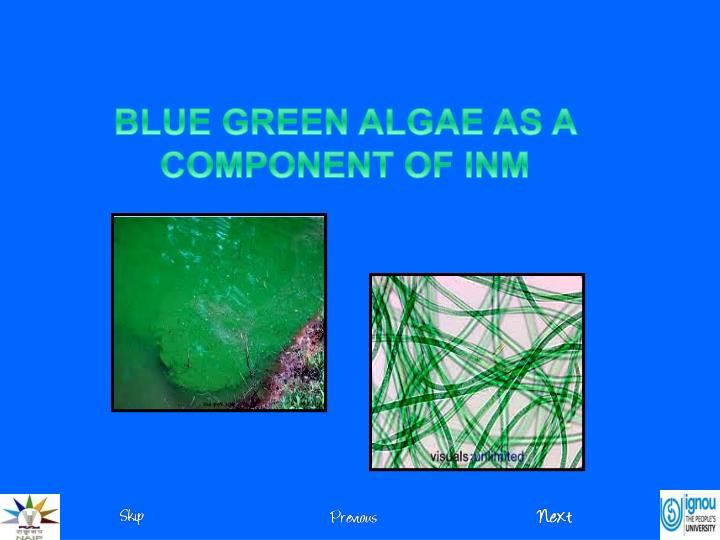 BLUE GREEN ALGAE AS A COMPONENT OF INM