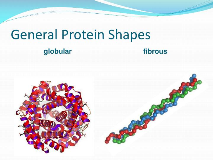 General Protein Shapes