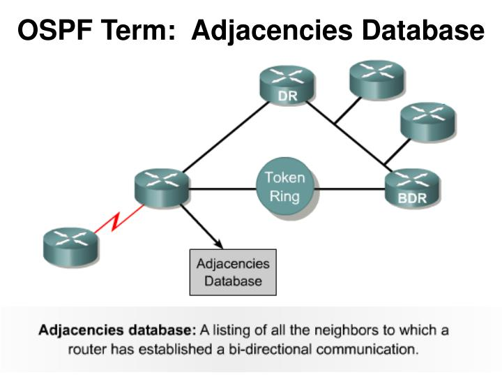 OSPF Term:  Adjacencies Database