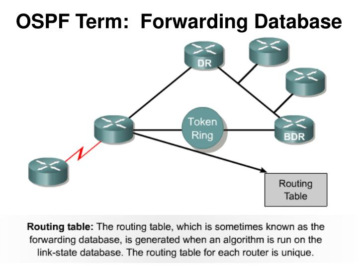 OSPF Term:  Forwarding Database