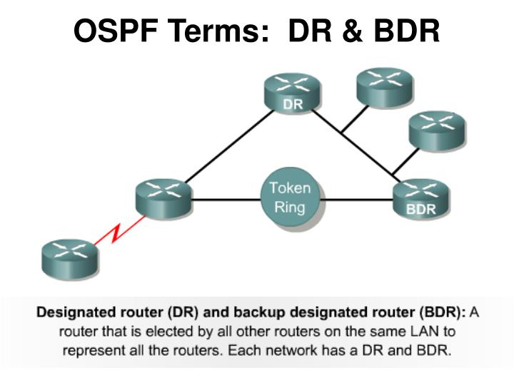 OSPF Terms:  DR & BDR