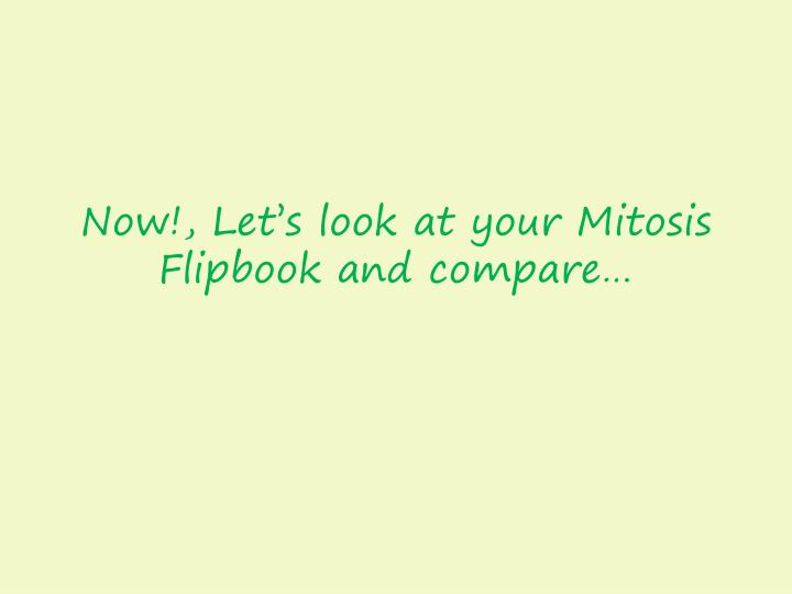 Now!, Let's look at your Mitosis Flipbook and compare…