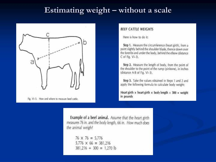 Estimating weight – without a scale