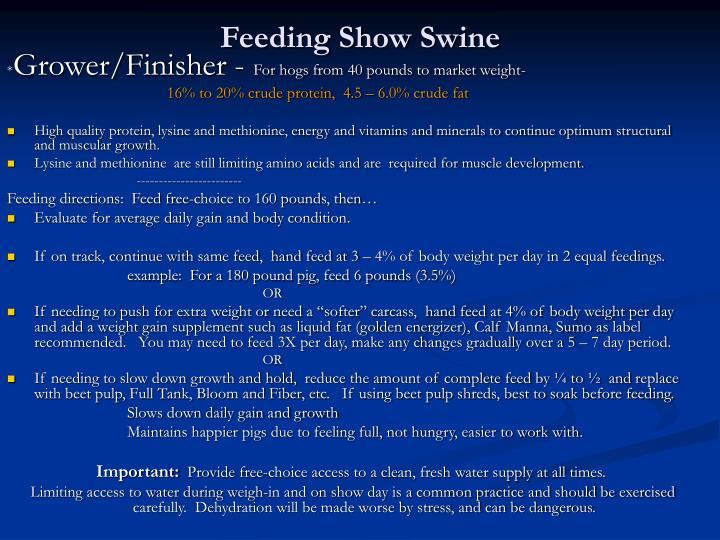 Feeding Show Swine