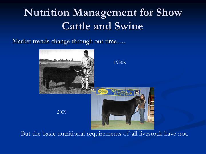 Nutrition management for show cattle and swine