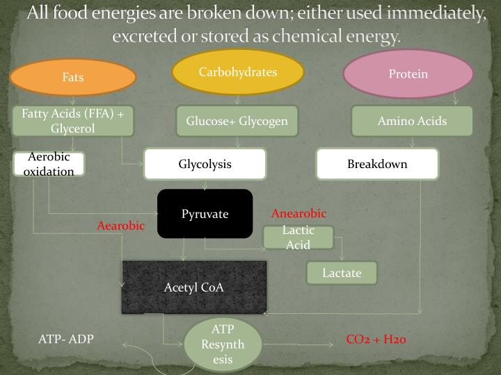 All food energies are broken down; either used immediately, excreted or stored as chemical energy.