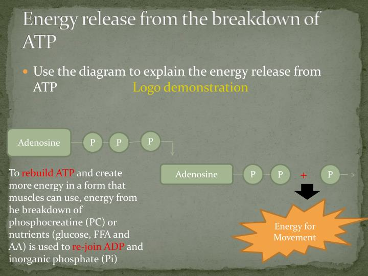 Energy release from the breakdown of ATP