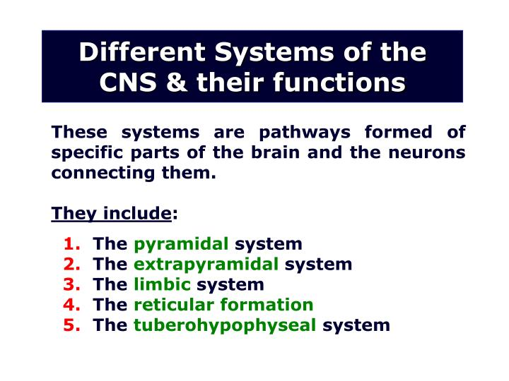 Different Systems of the