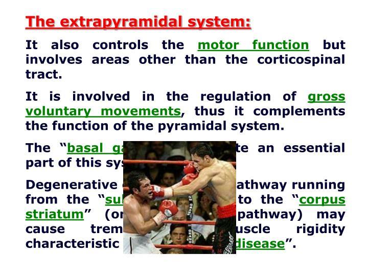 The extrapyramidal system: