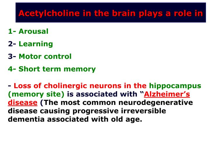 Acetylcholine in the brain plays a role in