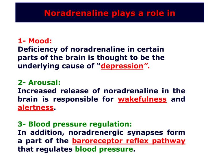 Noradrenaline plays a role in