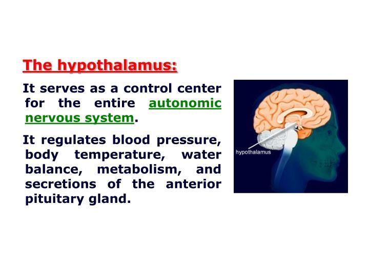 The hypothalamus: