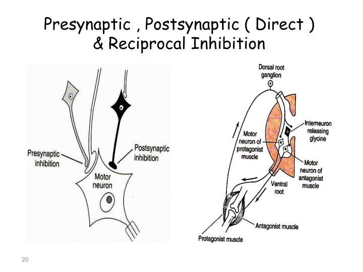 Presynaptic , Postsynaptic ( Direct )