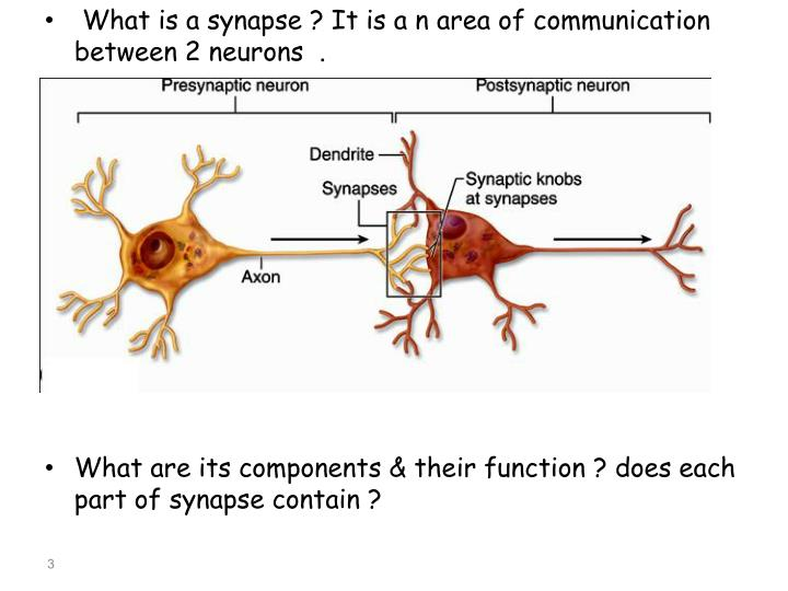 What is a synapse ? It is a n area of communication between 2 neurons  .