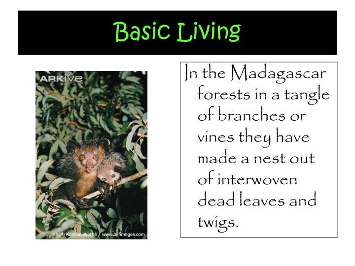 Basic Living