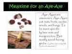 mealtime for an aye aye
