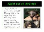 night for an aye aye