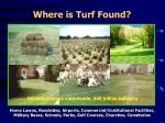 where is turf found