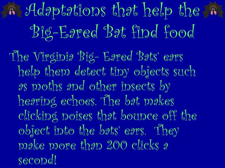 Adaptations that help the Big-Eared Bat find food