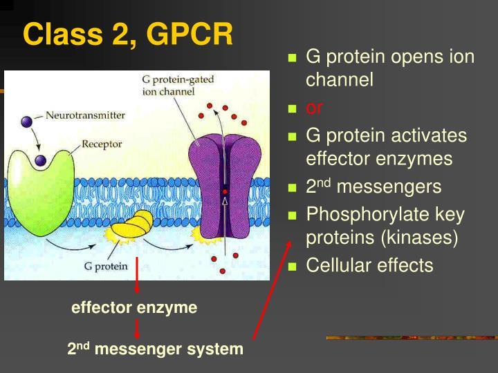 Class 2, GPCR