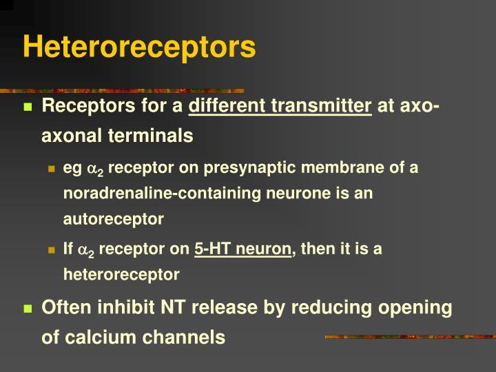 Heteroreceptors