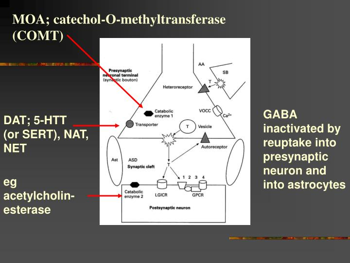 MOA; catechol-O-methyltransferase (COMT)