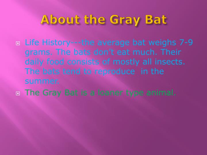 About the Gray Bat