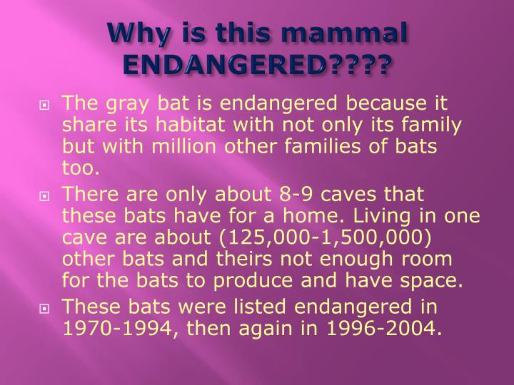 Why is this mammal ENDANGERED????