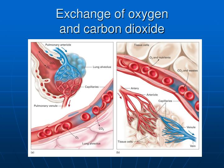 Exchange of oxygen
