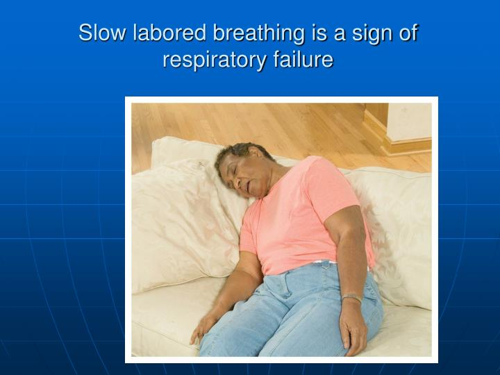 Slow labored breathing is a sign of respiratory failure