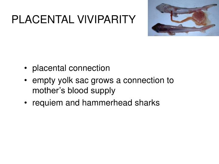 PLACENTAL VlVIPARITY