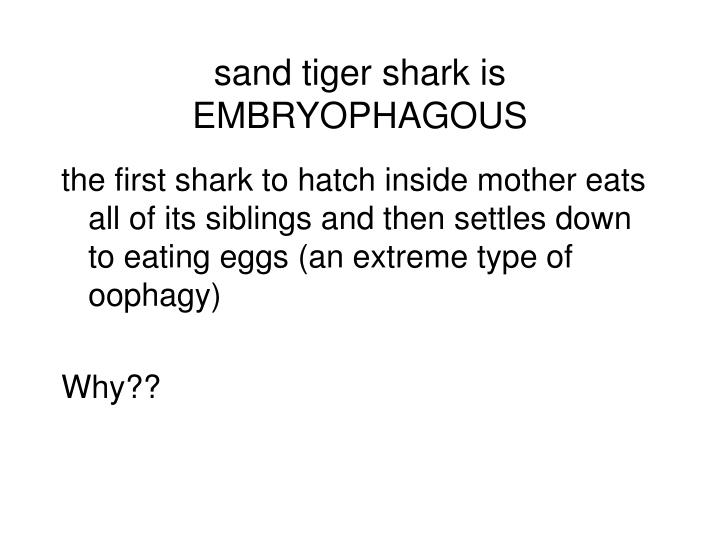 sand tiger shark is EMBRYOPHAGOUS