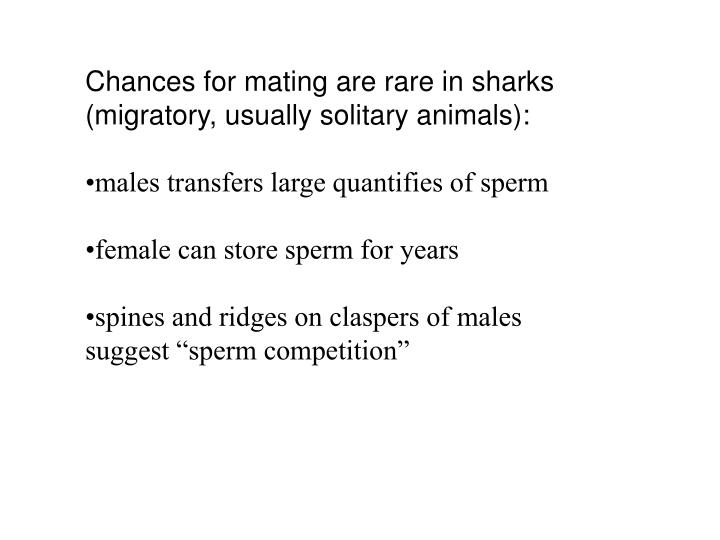 Chances for mating are rare in sharks (migratory, usually solitary animals):