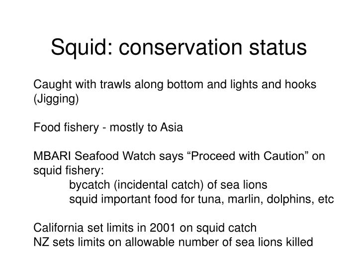 Squid: conservation status